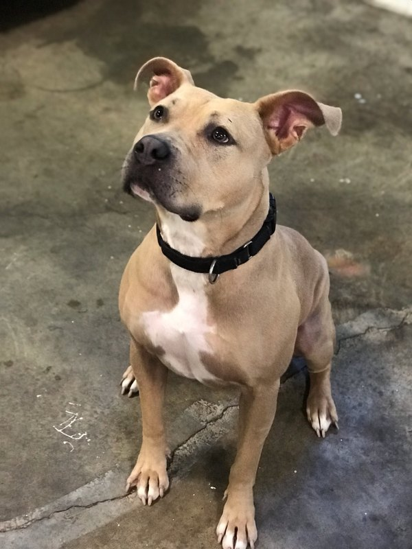 Rescues and Adoptables - Buckeye's Missions and Sanctuary